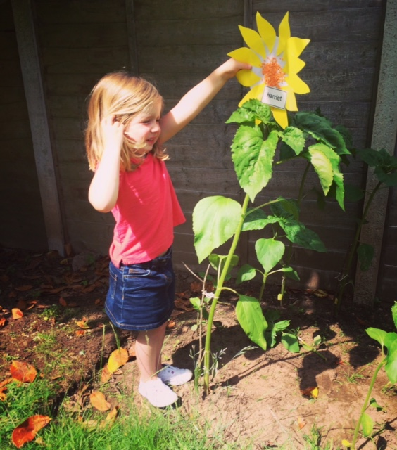 - Not every sunflower was blooming. But where they weren't, we were improvising!